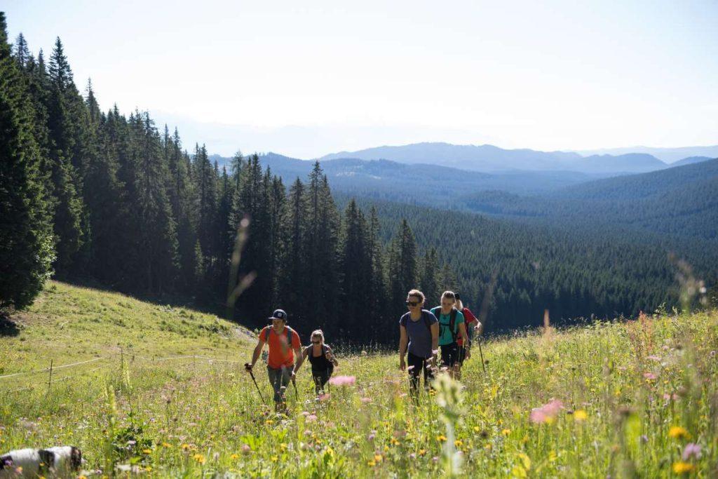 Hiking in Pokljuka Plateau